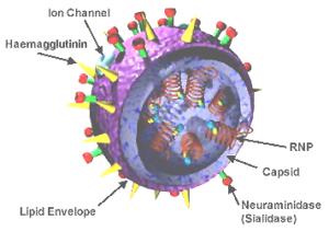 3d_influenza_virus1