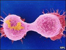 Dividing Breast Cell