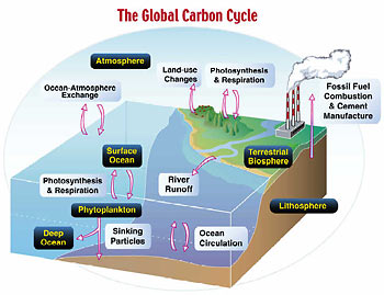 carbon_cycle
