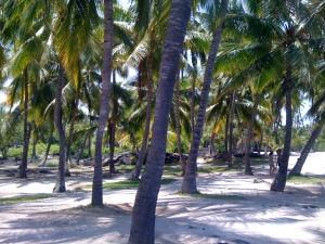 Ali'i's Coconut Grove, Pu'uhonua
