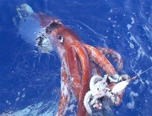 squid-10