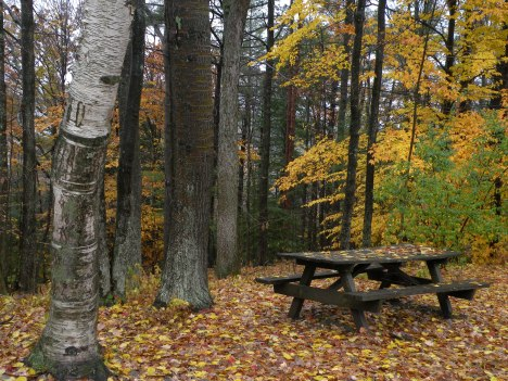 A lovely place for a picnic in Leonard Harrison State Park