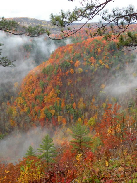 Bright Foliage amid the fog in Pine Creek Gorge