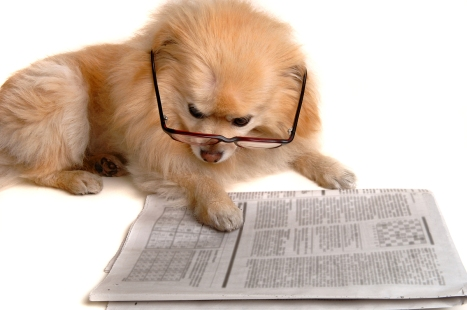 Dog_Reads_Newspaper
