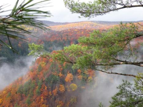 Morning fog in Pine Creek Gorge