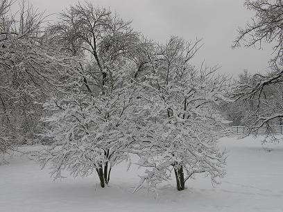 2 snow trees
